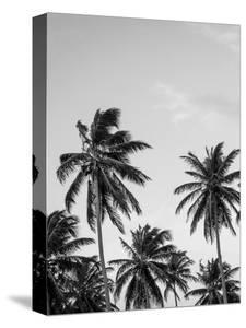 Palms in Grey by Design Fabrikken