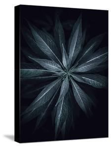 Star Flower by Design Fabrikken