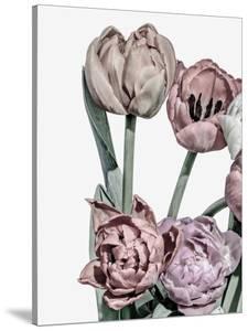 Tulips Bright 2 by Design Fabrikken