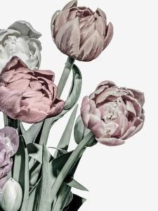 Tulips Bright by Design Fabrikken