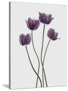 Tulips Purple by Design Fabrikken