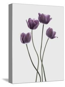 Tulips Purple by Design Fabrikken