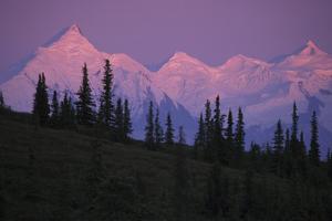 Alpenglow on Mt Brooks and Ak Range Denali Np Ak in Summer by Design Pics Inc