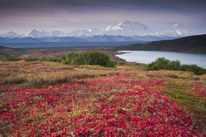 Early Morning View of Mt. Mckinley and Wonder Lake During Autumn by Design Pics Inc