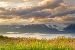 Field of Fireweed on Hill Overlooking Kachemak Bay and Grewingk Glacier by Design Pics Inc