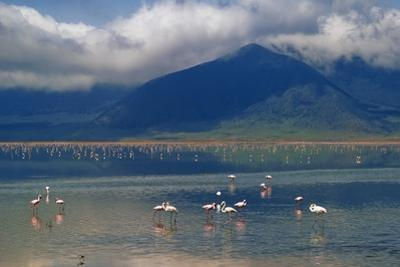 Flamingoes in Crater Lake at Ngorongoro by Design Pics Inc