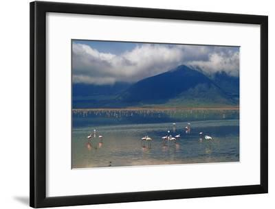 Flamingoes in Crater Lake at Ngorongoro