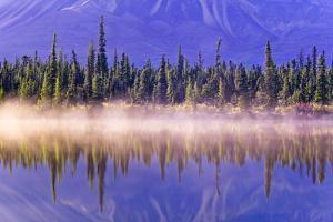 Forest Reflects by Design Pics Inc