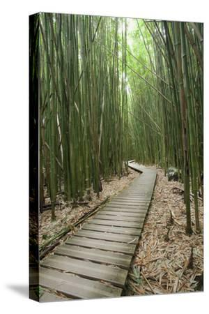 Hawaii, Maui, Kipahulu, Haleakala National Park, Trail Through Bamboo Forest on the Pipiwai Trail