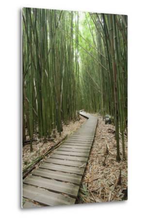 Hawaii, Maui, Kipahulu, Haleakala National Park, Trail Through Bamboo Forest on the Pipiwai Trail