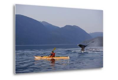 Man Sea Kayaking Near Swimming Pod of Humpback Whales Inside Passage Southeast Alaska Summer