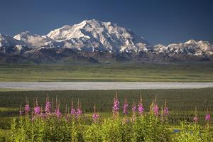 Mt.Mckinley and the Alaska Range with Fireweed Flowers by Design Pics Inc