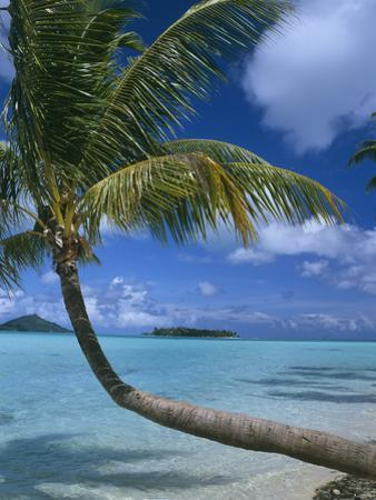 Palm Tree Leaning over Sea by Design Pics Inc