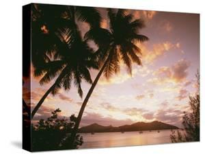 Palm Trees on Tropical Beach at Sunset, Nanuya Lai Lai by Design Pics Inc
