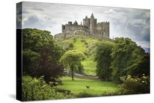 Rock of Cashel; Cashel County Tipperary Ireland by Design Pics Inc