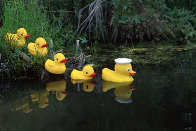 Rubber Ducks in a Row Pond Southcentral Alaska by Design Pics Inc