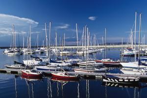 Sailboats Moored in Harbor Marina by Design Pics Inc