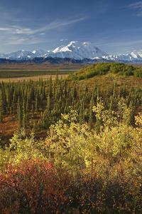 Scenic of Fall Tundra and Yellow Aspen Trees with Mt. Mckinley by Design Pics Inc