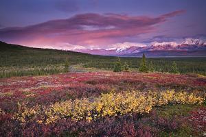 Scenic View of Alpine Tundra with Alaska Range by Design Pics Inc