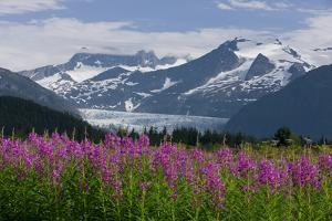 Scenic View of Mendenhall Glacier with Fireweed in the Foreground by Design Pics Inc