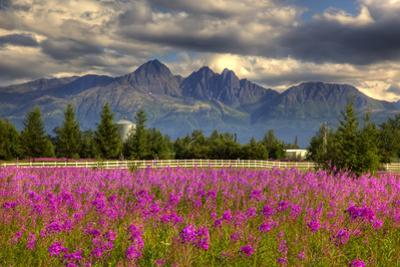 Scenic View of Pioneer Peak with Fireweed in the Foreground, Palmer, Alaska by Design Pics Inc