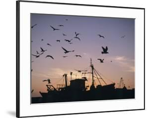 Sea Gulls Flying over Fishing Boats at Dusk in the Harbor by Design Pics Inc
