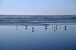 Seagulls Standing on the Shore as the Waves Roll In by Design Pics Inc
