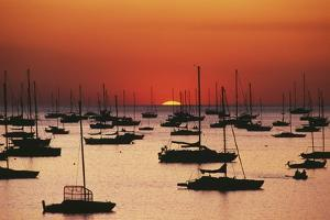 Silhouetted Sailboats in Darwin Harbor by Design Pics Inc