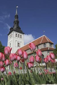Tulips Outside Niguliste Church, Tallinn, Estonia by Design Pics Inc