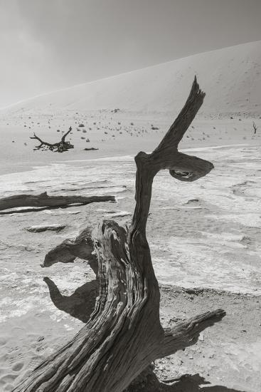 Desolation in the Namib Desert-asiercu-Photographic Print