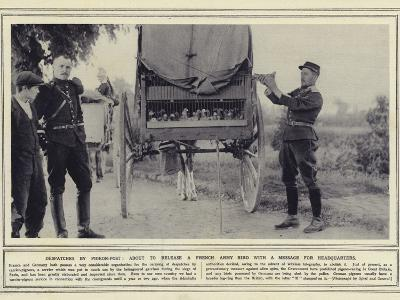 Despatches by Pigeon-Post, About to Release a French Army Bird with a Message for Headquarters--Photographic Print