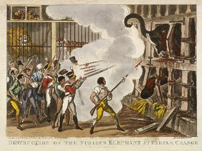 Destruction of the Furious Elephant at Exeter Change, 1826-George Cruikshank-Giclee Print