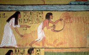 Detail of a Harvest Scene on the East Wall, from the Tomb of Sennedjem, the Workers' Village