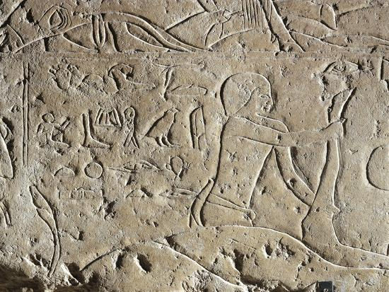 Detail of Ancient Egyptian Limestone Relief Depicting Butchering of Bull, Old Kingdom--Giclee Print