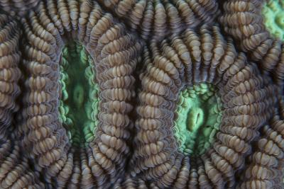 Detail of Coral Polyps on a Reef in Lembeh Strait-Stocktrek Images-Photographic Print