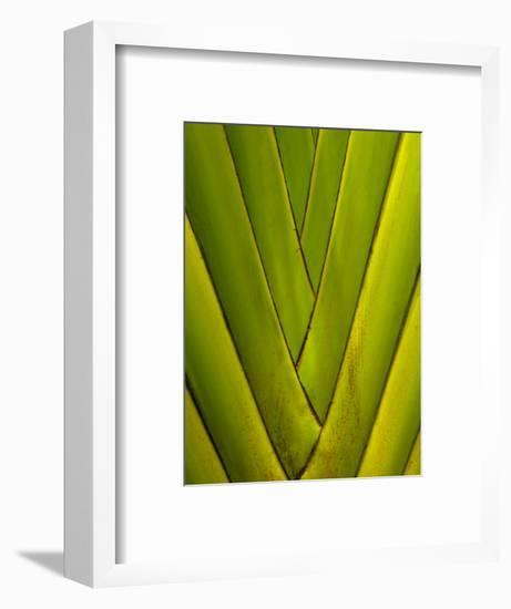 Detail of Palm Leaf-Guylain Doyle-Framed Photographic Print