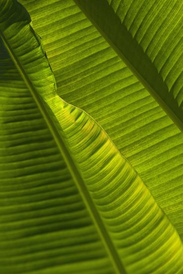 Detail of Palm Tree; Barbados-Design Pics Inc-Photographic Print
