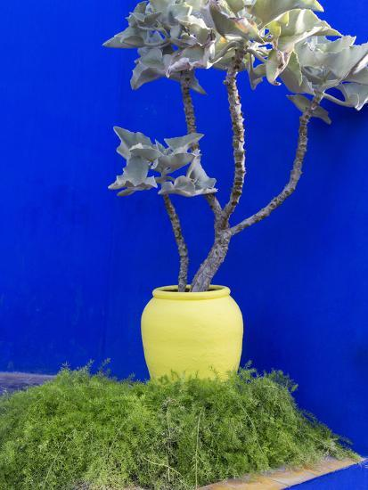 Detail of Potted Plant Against Blue Wall-Stephen Studd-Photographic Print