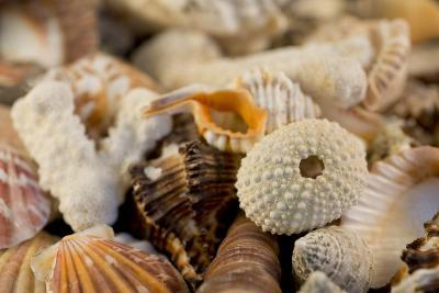 Detail of Seashells from around the World-Cindy Miller Hopkins-Photographic Print