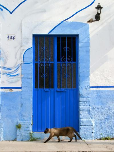 Detail of Siamese Cat in Doorway with Wrought Iron Cover, Puerto Vallarta, Mexico-Nancy & Steve Ross-Photographic Print