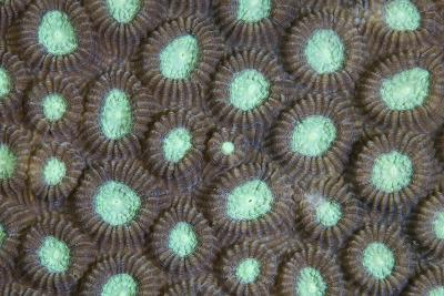 Detail of the Polyps of a Reef-Building Coral-Stocktrek Images-Photographic Print
