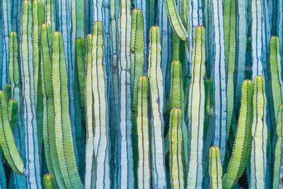 DETAIL VIEW OF THE CARDON CACTUS IN SUMMER WITH RICH BLUE GREEN AND TORQOUISE COLORS-ED Reardon-Photographic Print