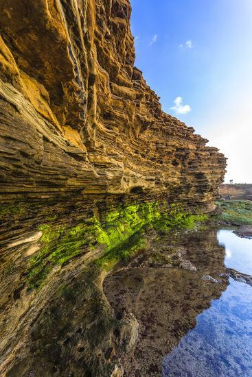Details and Reflection of the Cliffside, San Diego, Ca-Andrew Shoemaker-Photographic Print