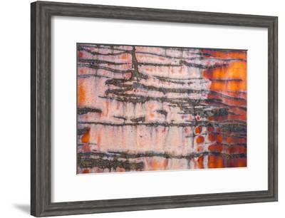 Details of rust and paint on metal.-Zandria Muench Beraldo-Framed Premium Photographic Print