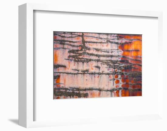 Details of rust and paint on metal.-Zandria Muench Beraldo-Framed Photographic Print