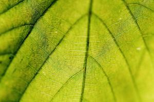 Details on a Leaf