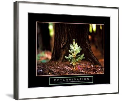 Determination: Little Pine--Framed Art Print