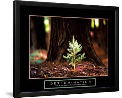 Determination - Little Pine