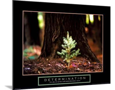 Determination: Little Pine--Mounted Print