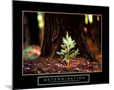 Determination: Little Pine